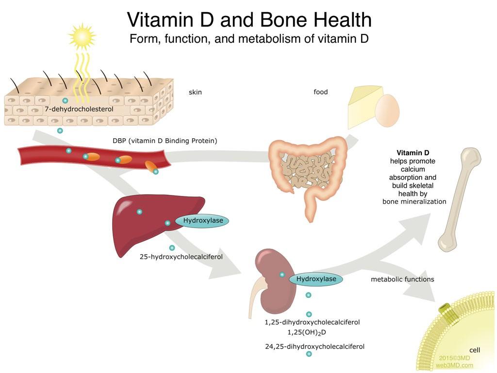 OSNY treats hyoparathyroidism